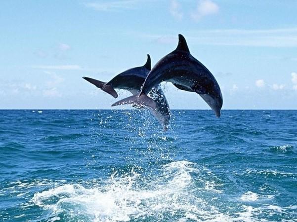 澳大利亚(含墨),新西兰,海豚岛12天海豚之旅