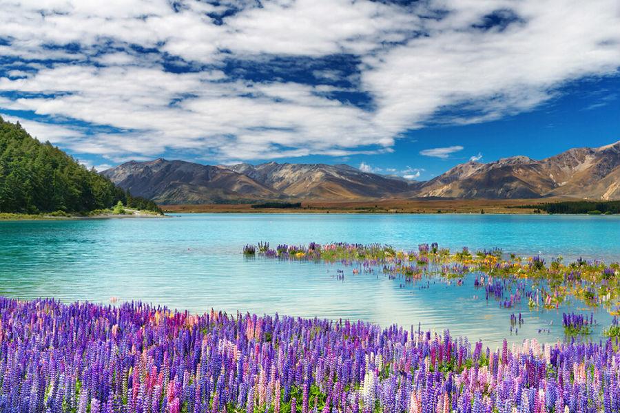 新西兰南、北岛10天100%纯净之旅