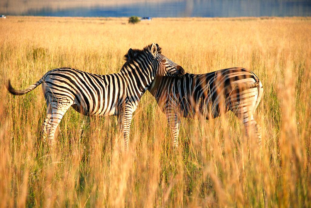 魅力南非至尊8日游